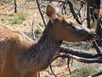 Close Elk